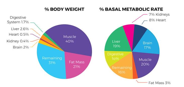 Fat-Loss-Blog-Graphics-05-1