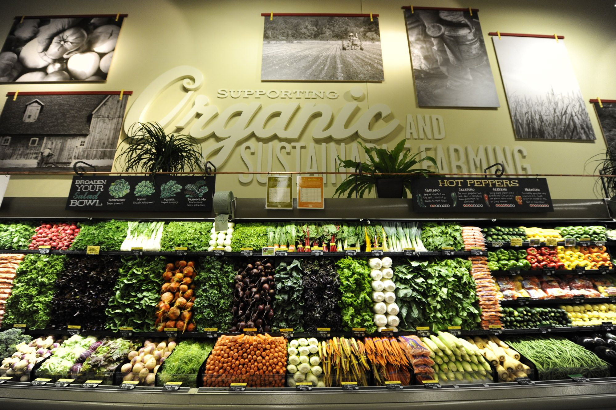 Go Green!  Buy Organic and Sustainable