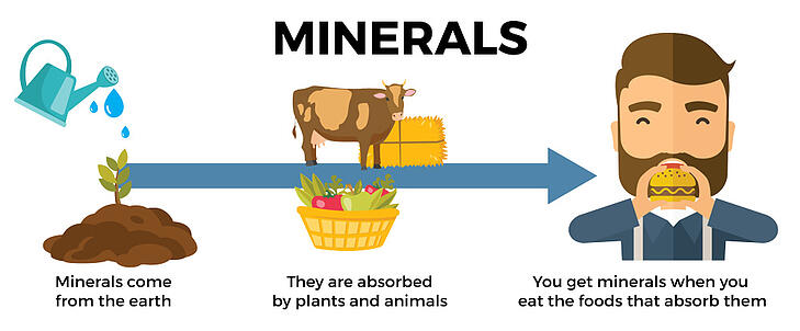 Micro-Nutrient-Blog-Graphics-01-(1)-1