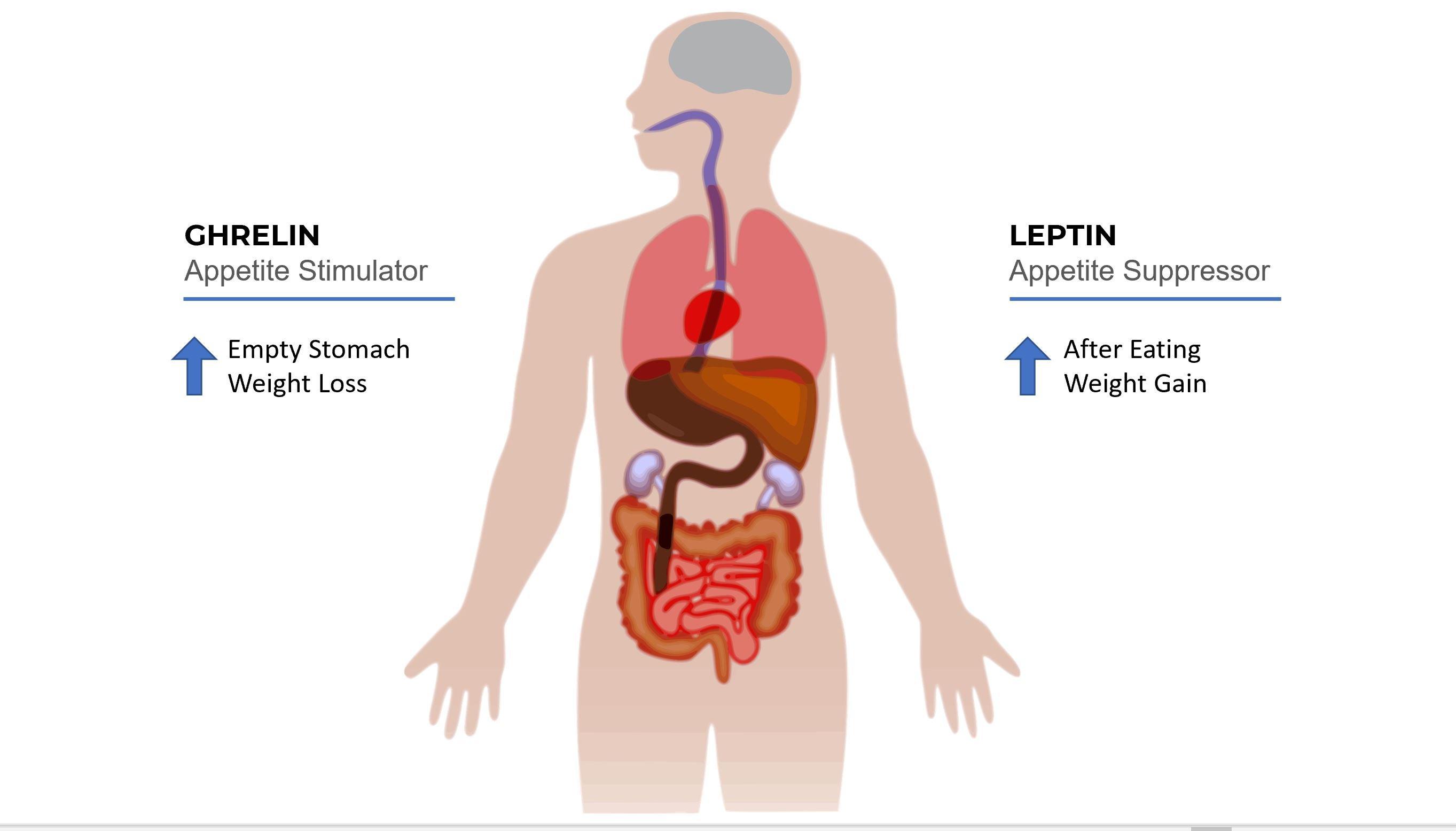 appetite hormones