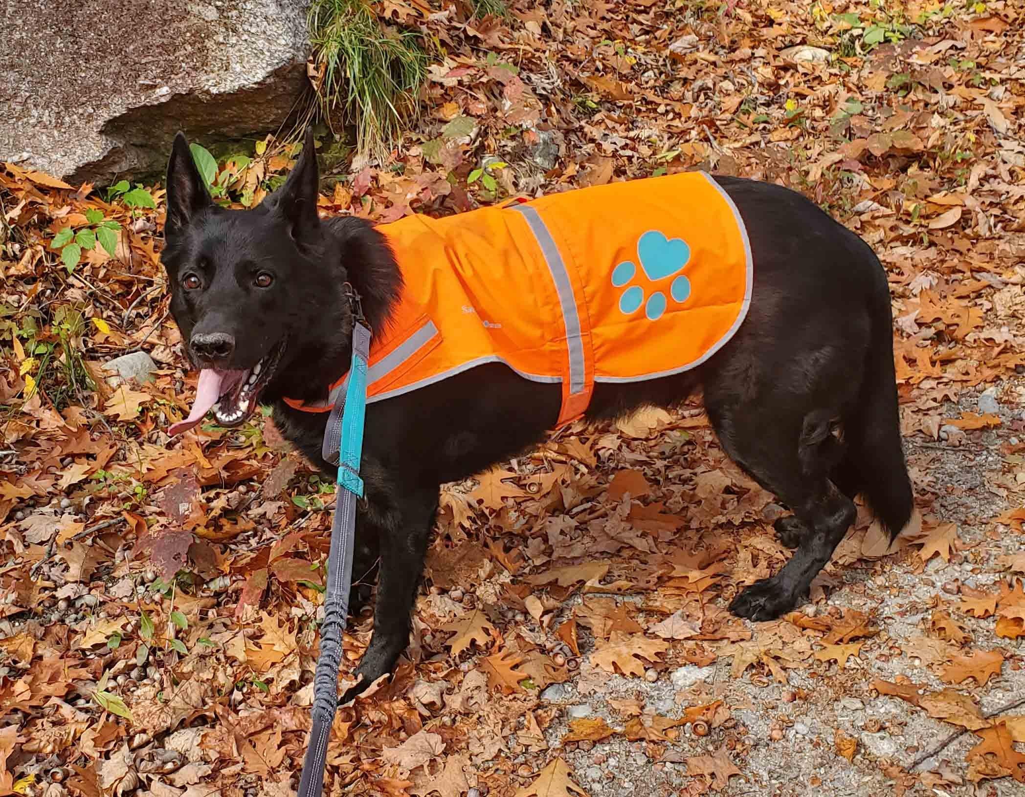 Ashley Walking Dog