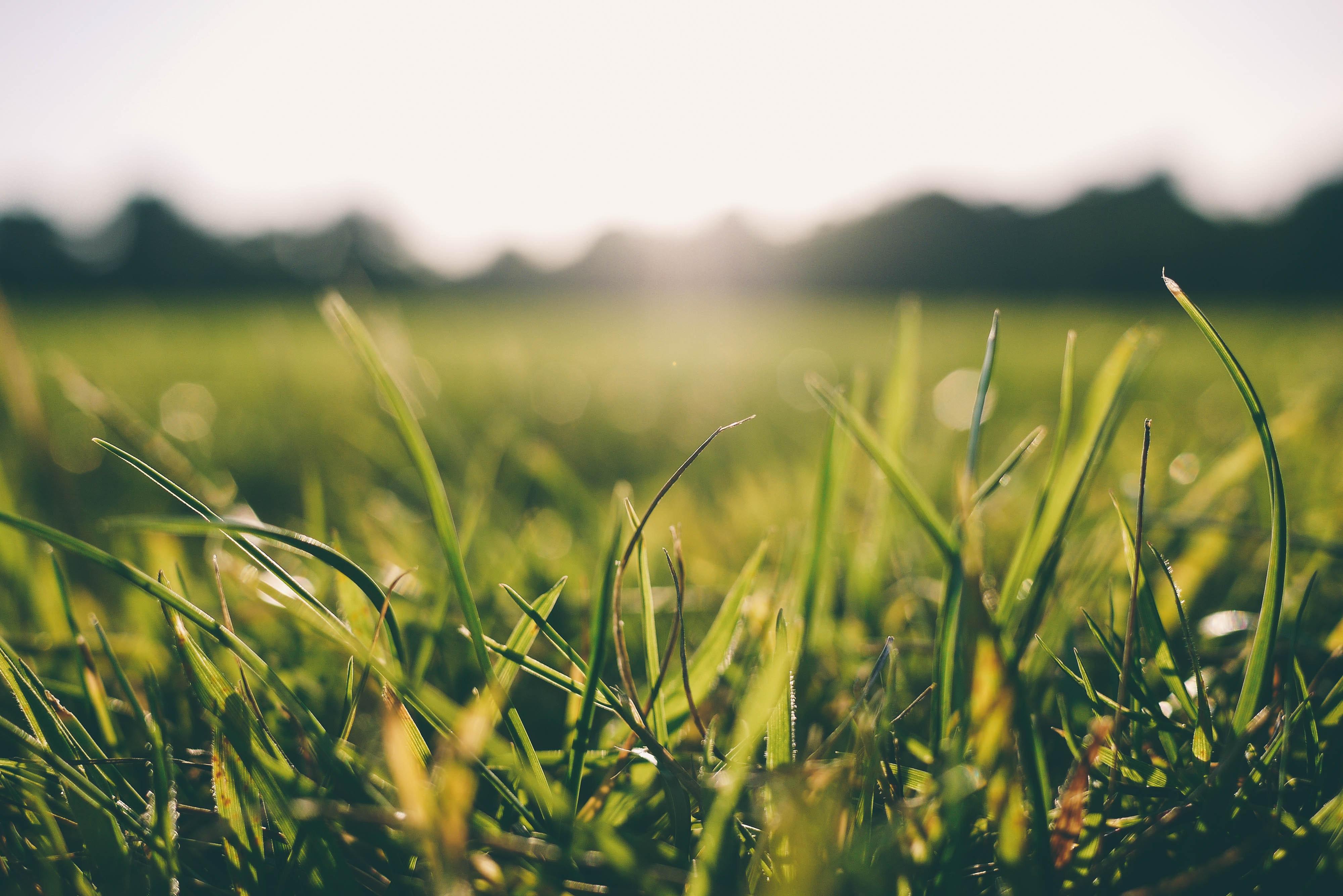 Sun shining on a grassy meadow