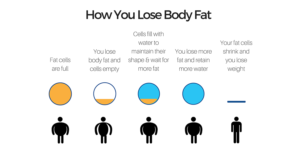 how you lose fat-1