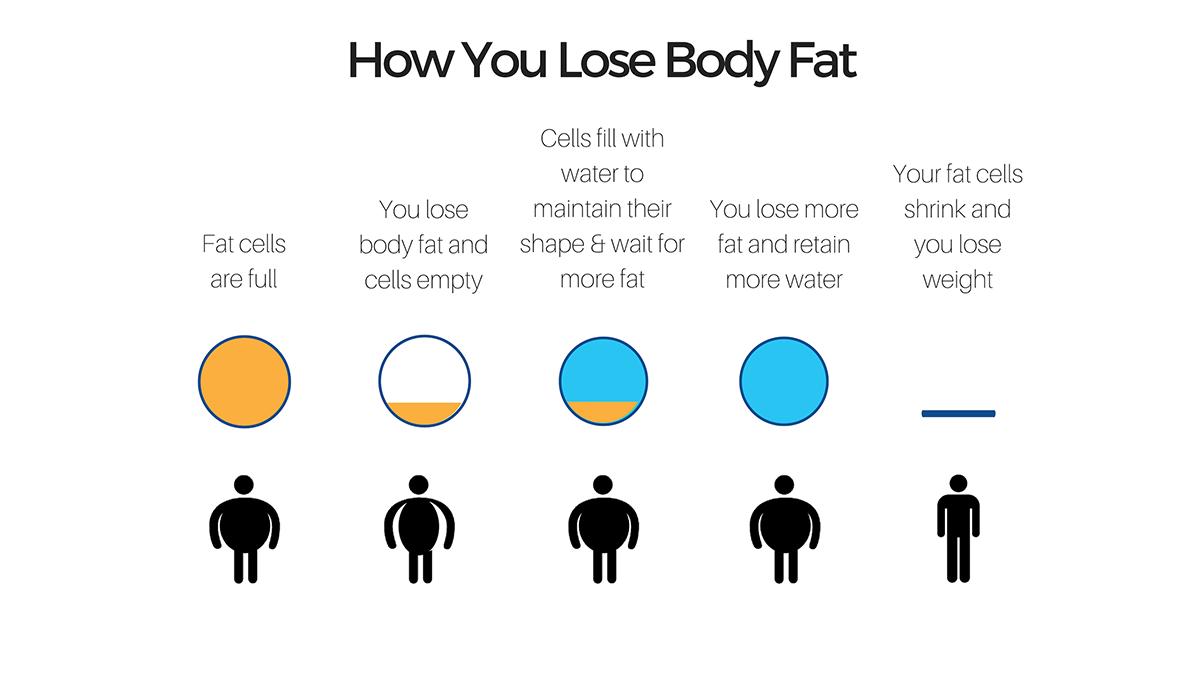 How You Lose Body Fat: loseit