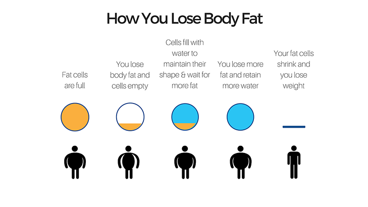 how you lose fat-2