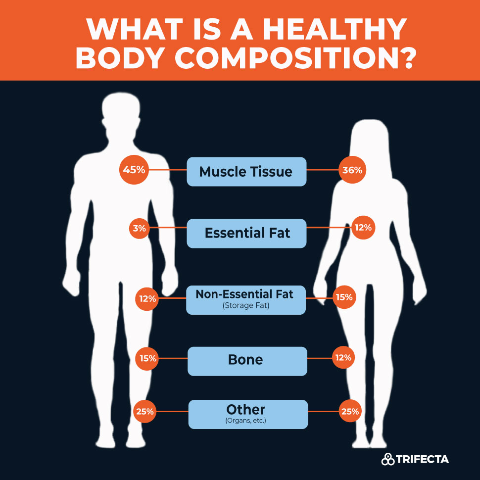 what-is-a-healthy-body-composition-2
